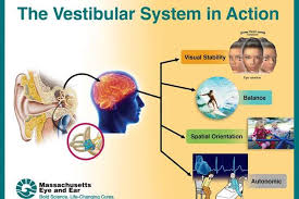 Image result for vestibular